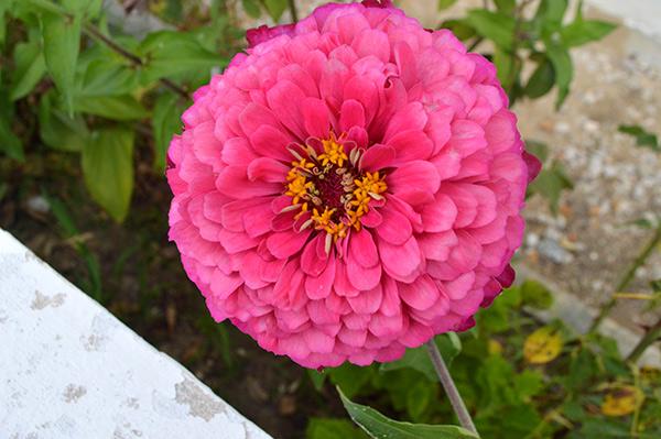flor-cerca-3