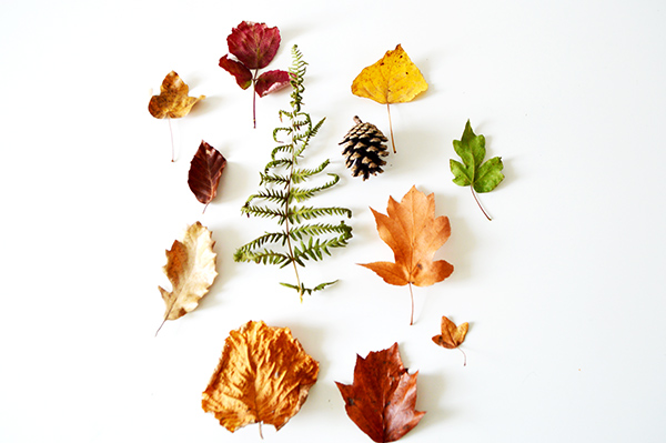 helecho-con-hojas