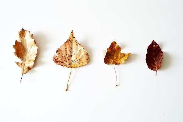 hojas-marrones