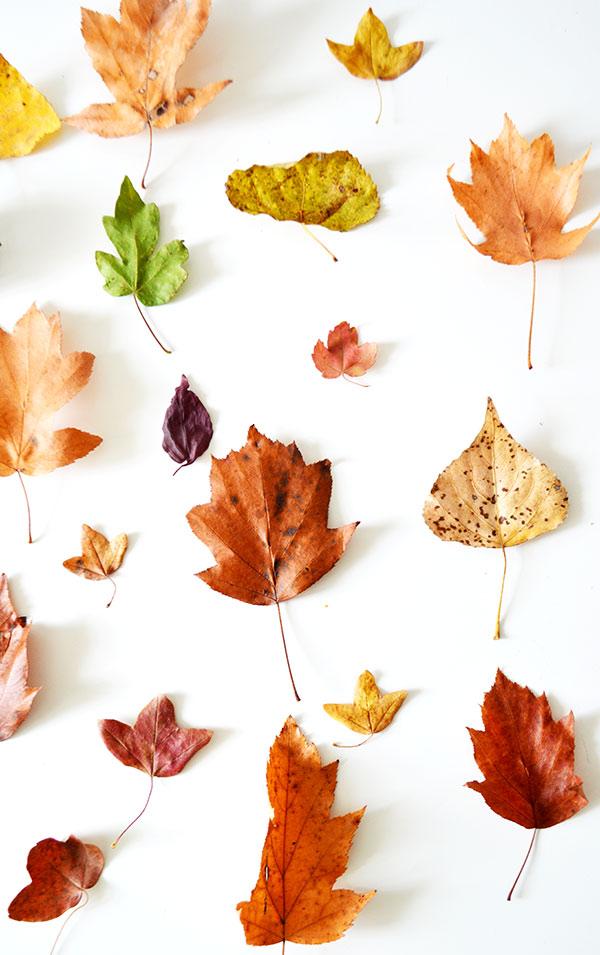 mas-hojas