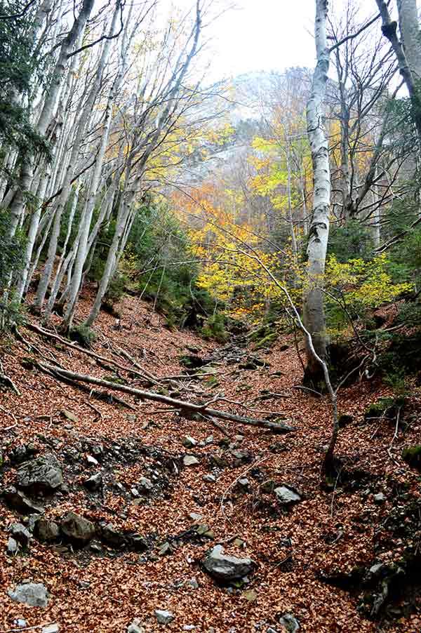 bosque-hojas
