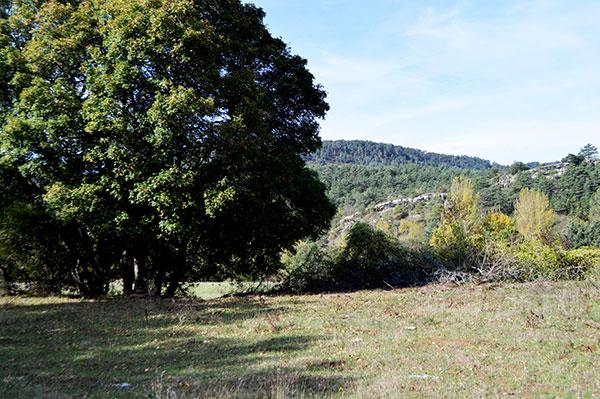 campo-y-arbol