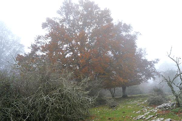 arboles-niebla