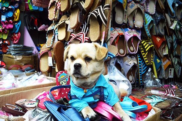 perro-zapatillas