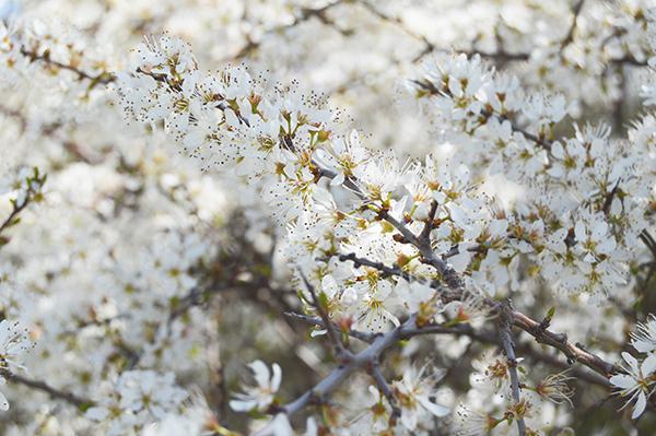 AYS-paseo de primavera-3