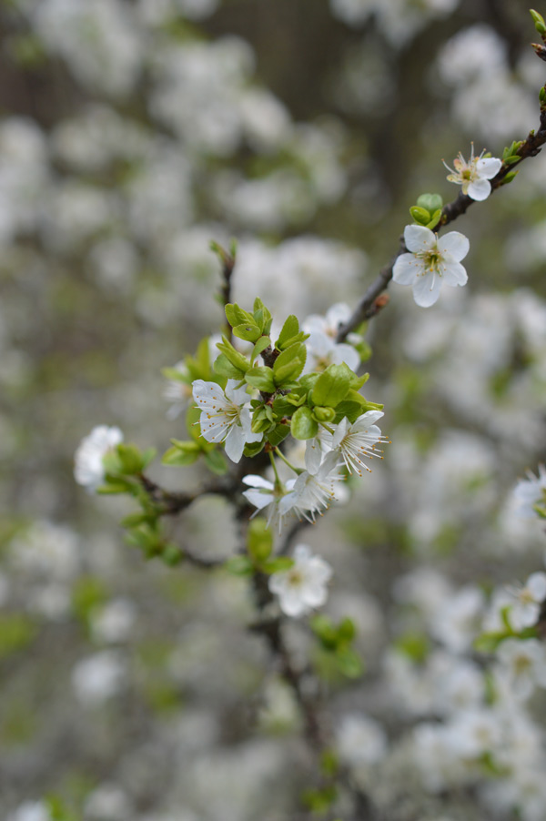 primavera-14