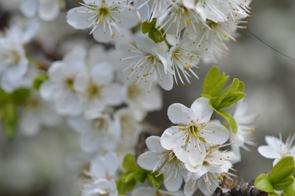 primavera-16