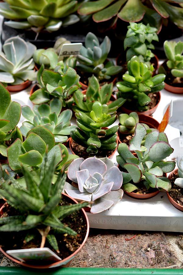 comprando-plantas-12